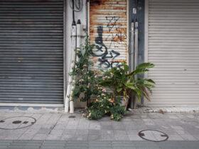 亜茶子用 シャッターと植木